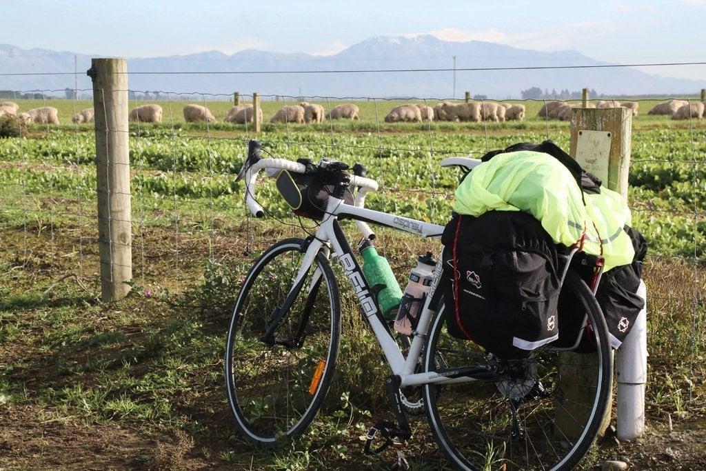 Sheep farms when cycling christchurch to queenstown