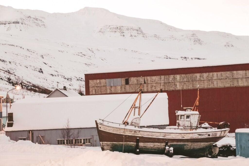 Seydisfjordur town to spot wild reindeer in iceland