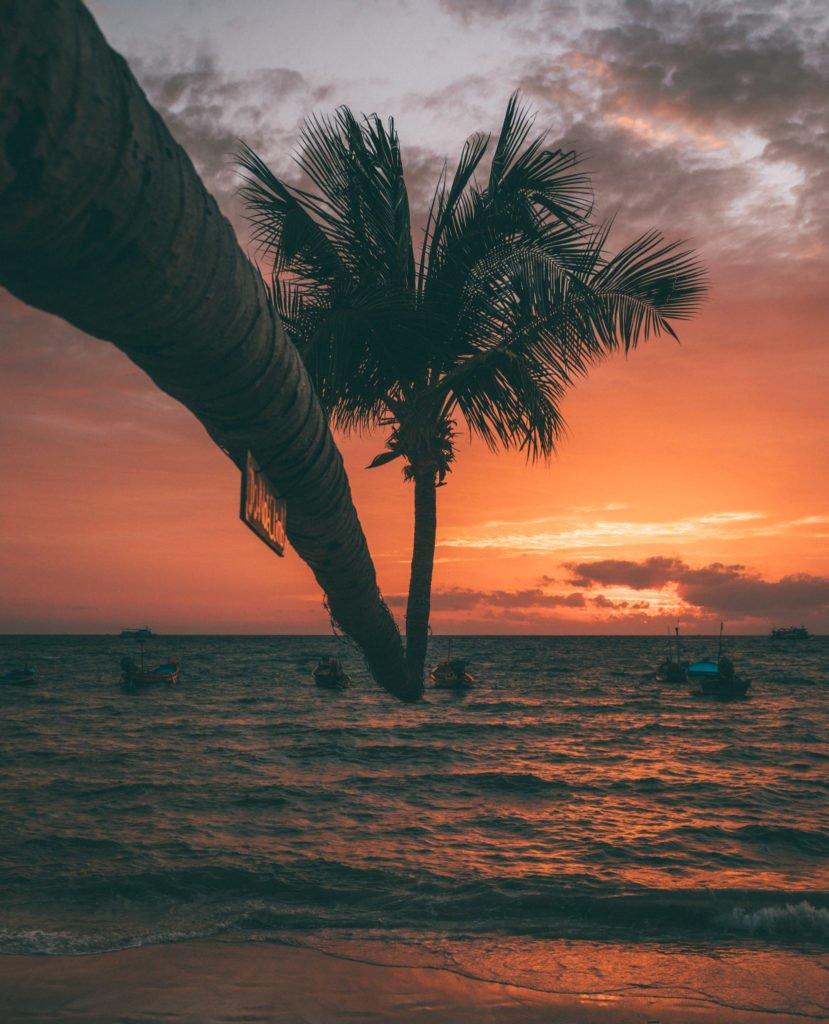 sairee beach sunset palm beaches on koh tao