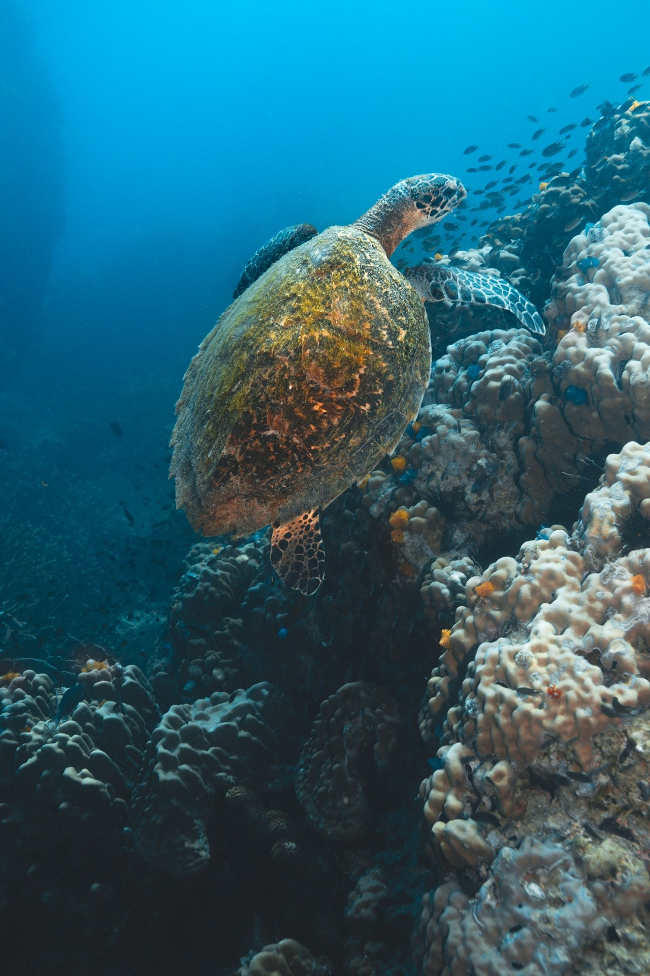 scuba diving turtle things to do on koh tao