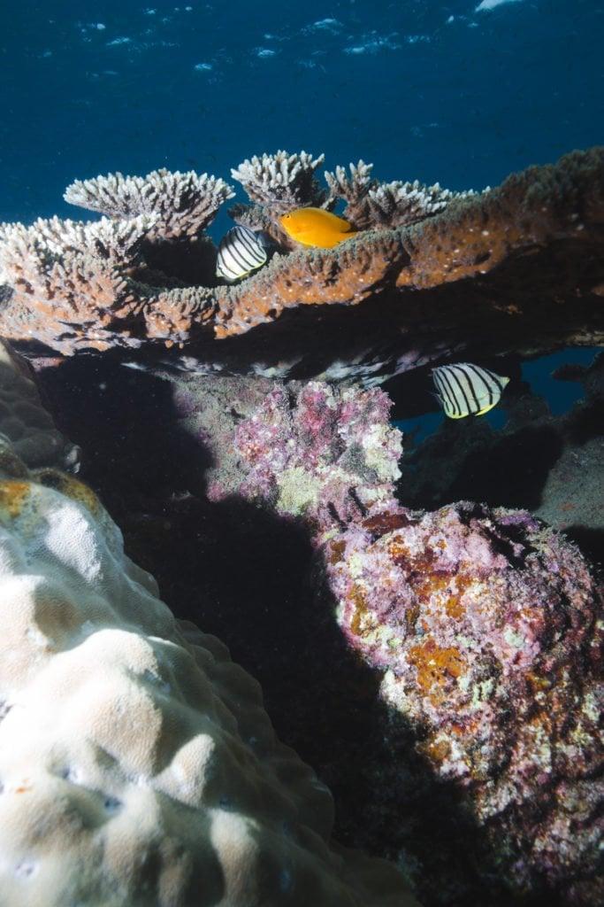 coral at tanote bay koh tao