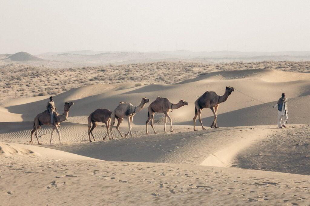JAISALMER DESERT SAFARI, OVERNIGHT CAMEL SAFARI