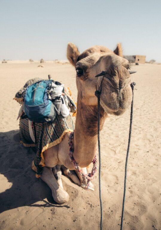 THAR CAMEL DESERT SAFARI JAISALMER