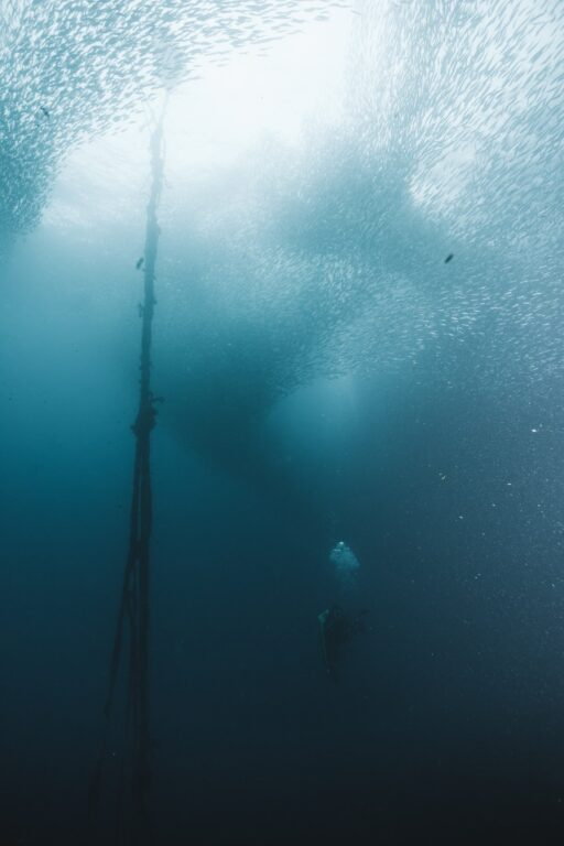 diver with the sardines at moalboal