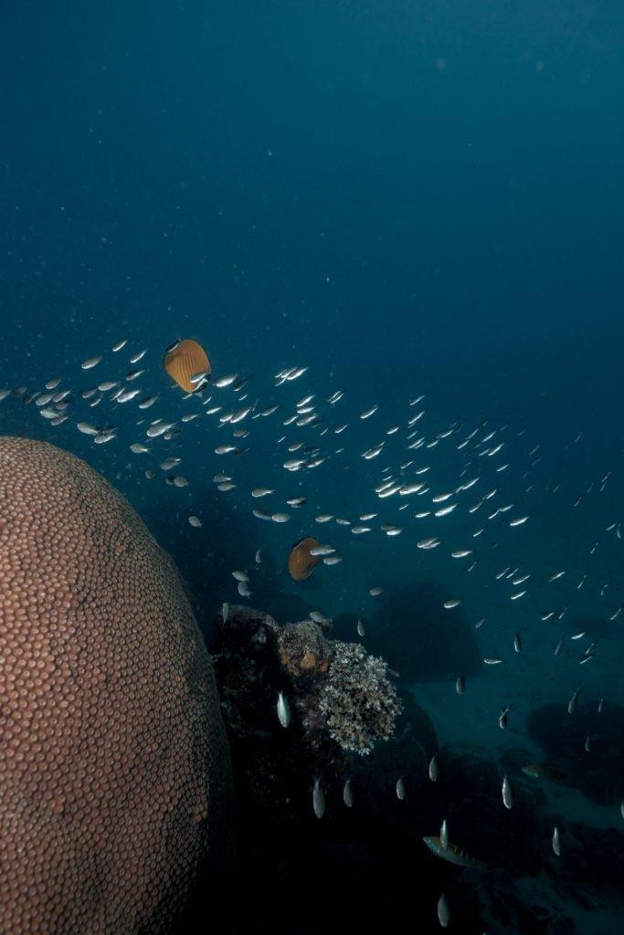 tanote bay koh tao underwater photo