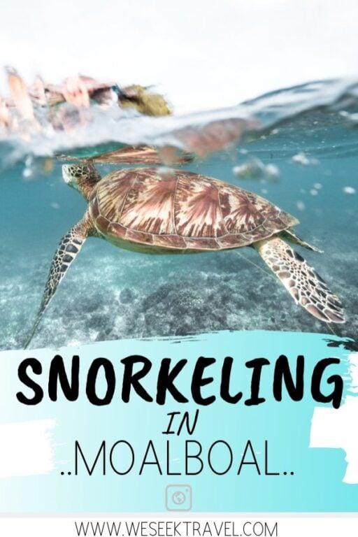 snorkeling in moalboal pinterest turtle