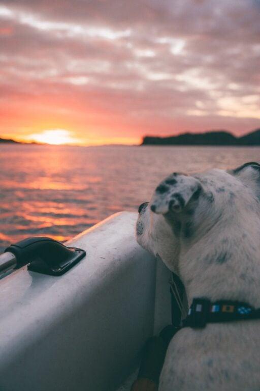 sailing whitsundays with a dog