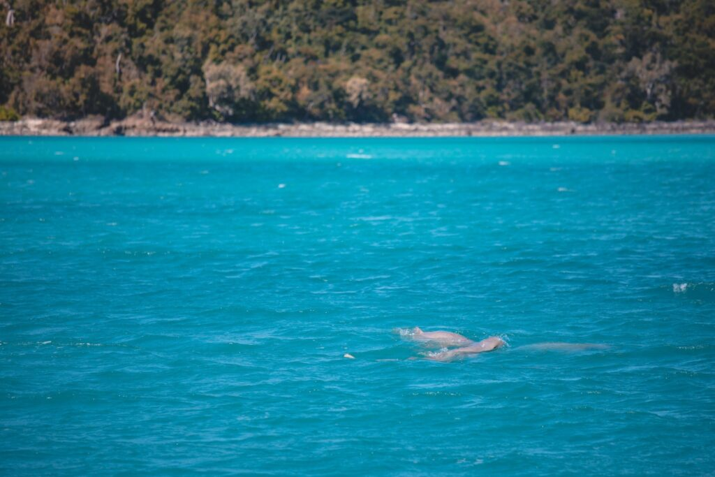 SAILING LOG WEEK 5 AIRLIE BEACH TO TOWNSVILLE DOLPHINS