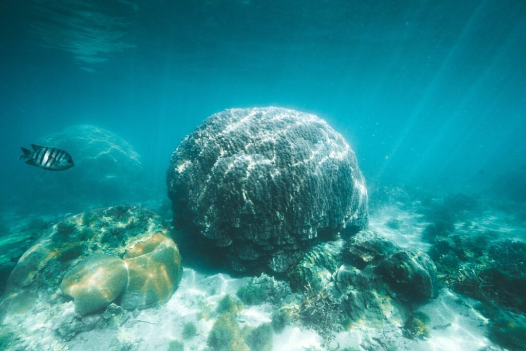 SNORKELING GEOFFREY BAY MAGNETIC ISLAND, THINGS TO DO