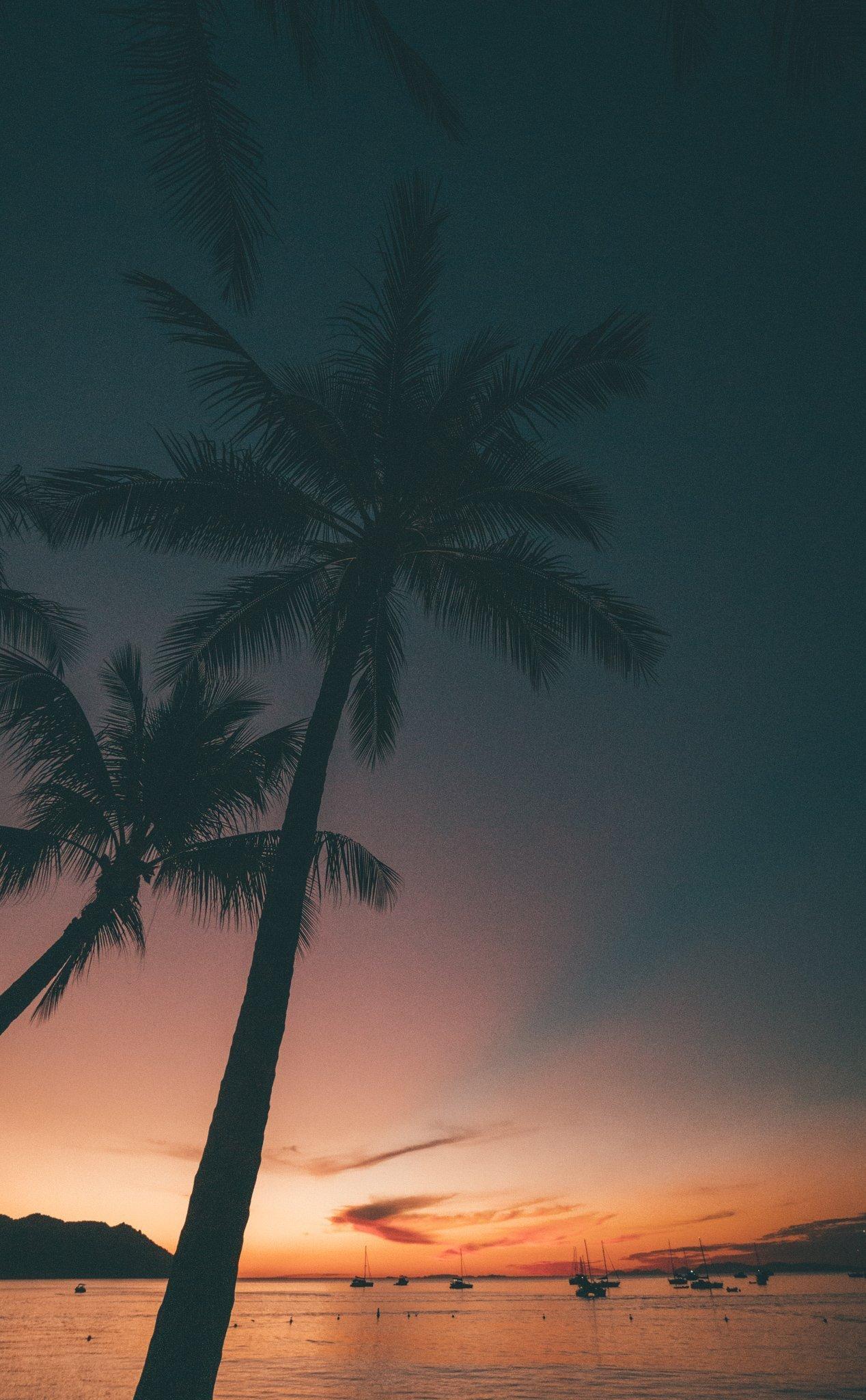 Magnetic Island Sunset Palms at HorseShoe Bay