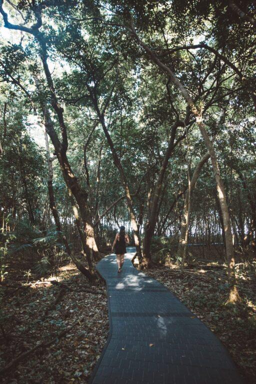 Walking in the Green Island Rainforest