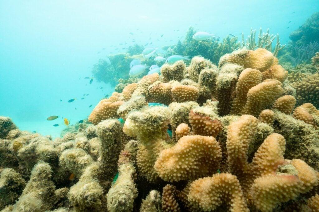 Green Island Reef Snorkeling