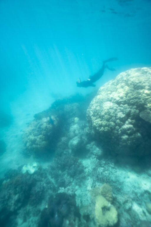 SNORKELING NEAR HARD CORAL ON THE GREAT BARRIER REEF