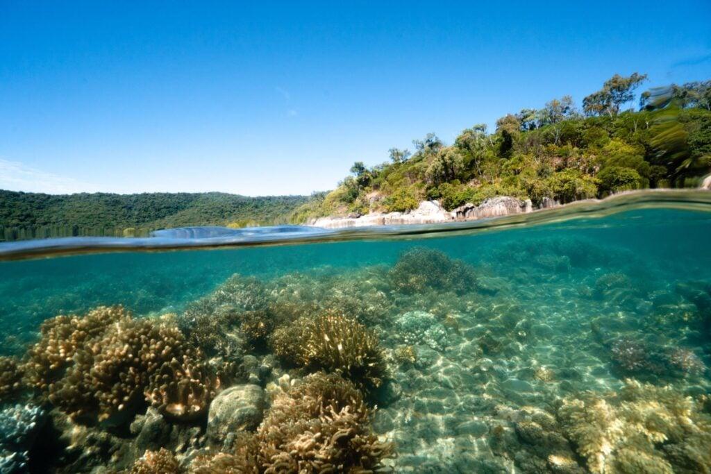 Orpheus Island Snorkeling on the fringing reef