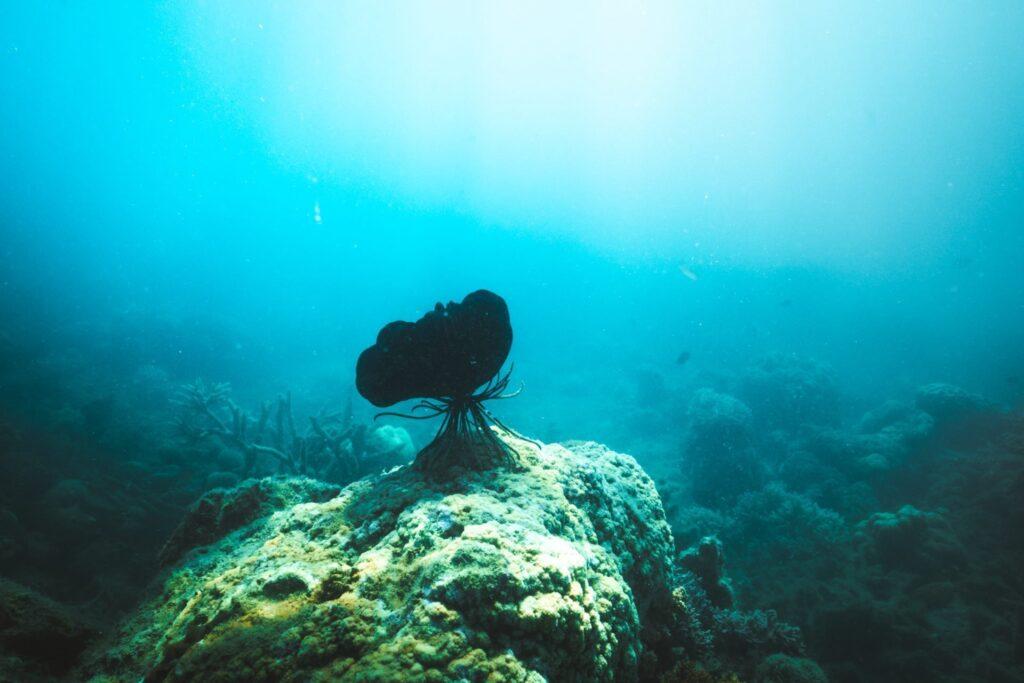 Underwater Orpheus Island Snorkeling