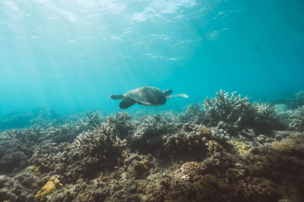 TURTLE ON FITZROY ISLAND CAIRNS
