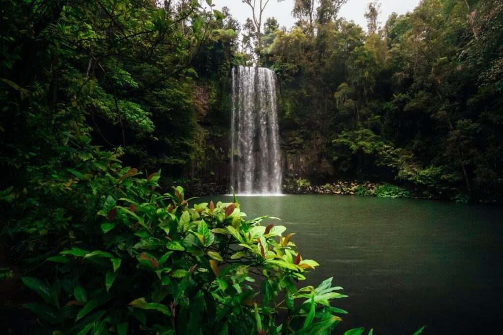 MILLAA MILLA AFALLS, CAIRNS WATERFALLS, THINGS TO DO