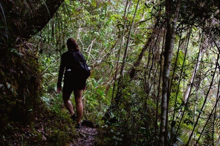 LIWAGU TRAIL HIKE IN KINABALU NATIONAL PARK