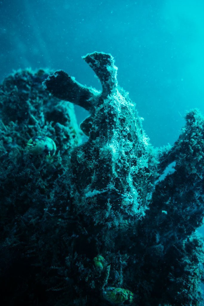 FROGFISH AT MABUL ISLAND HOUSE REEF DIVING
