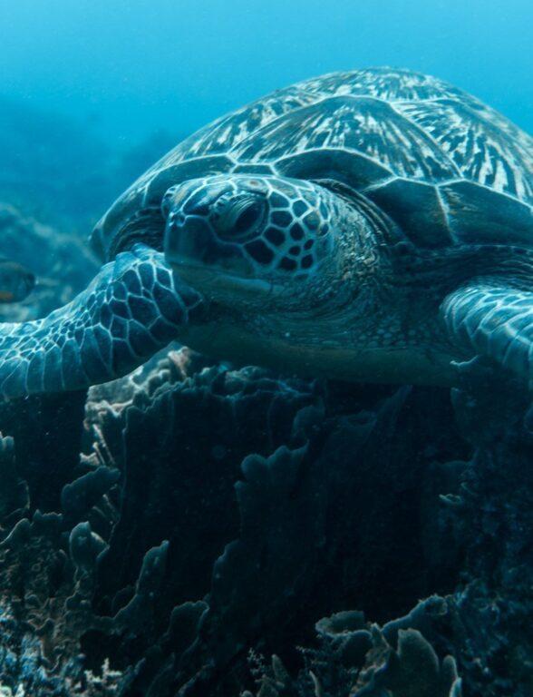 KOMODO ISLAND TURTLES
