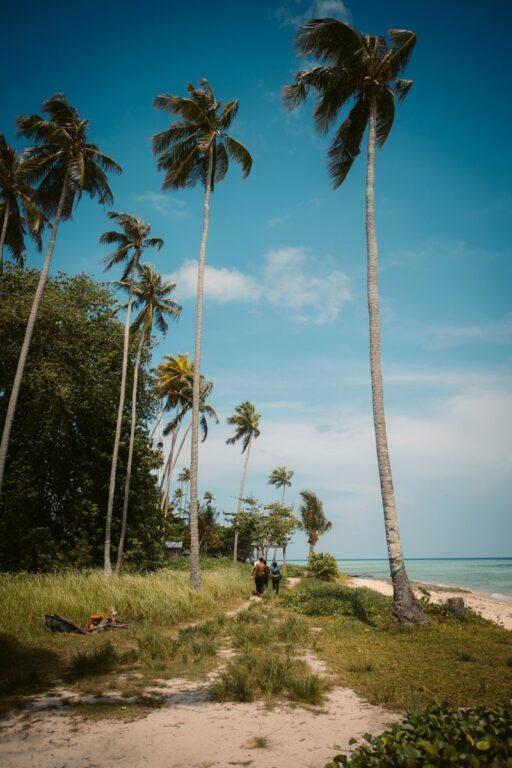SIBUAN ISLAND PALM TREES