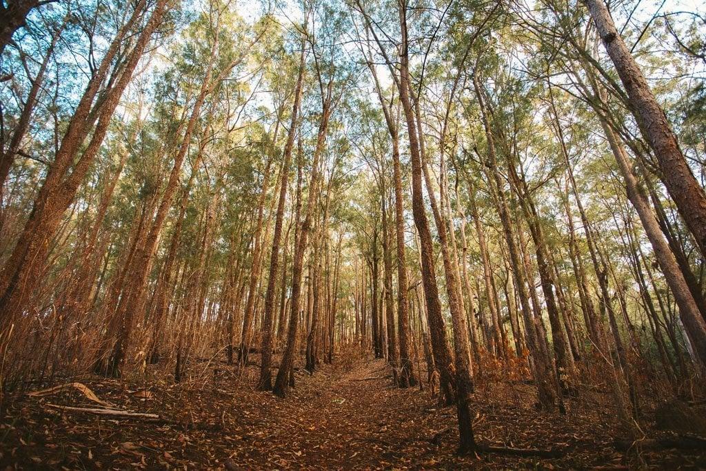 KAHLPAHLIM ROCK TRACK PINE FOREST