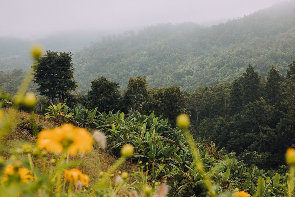 YUN LAI VIEWPOINT IN PAI FOR FREE