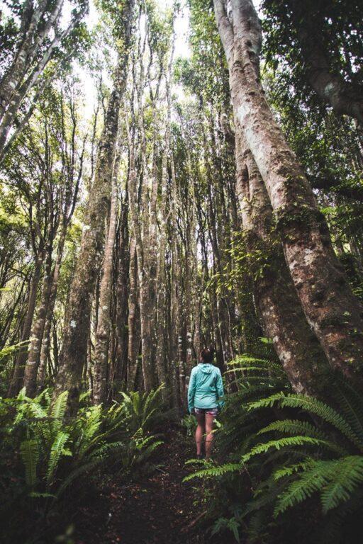 WAIPOHATU WATERFALL HIKE CATLINS SOUTH ISLAND NEW ZEALAND
