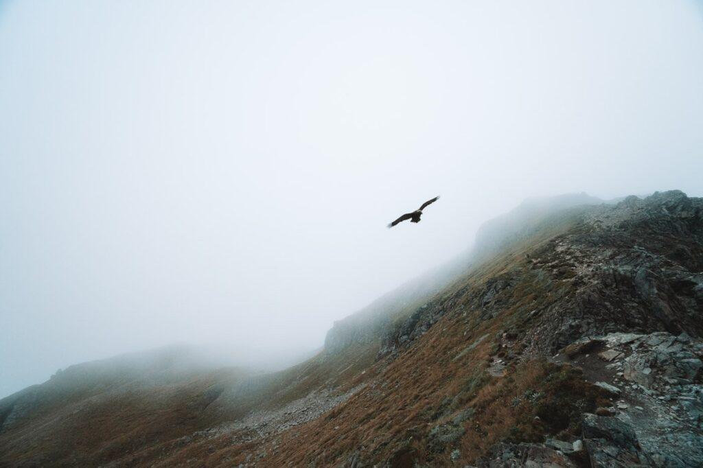 KEA BIRD NEAR ARTHURS PASS