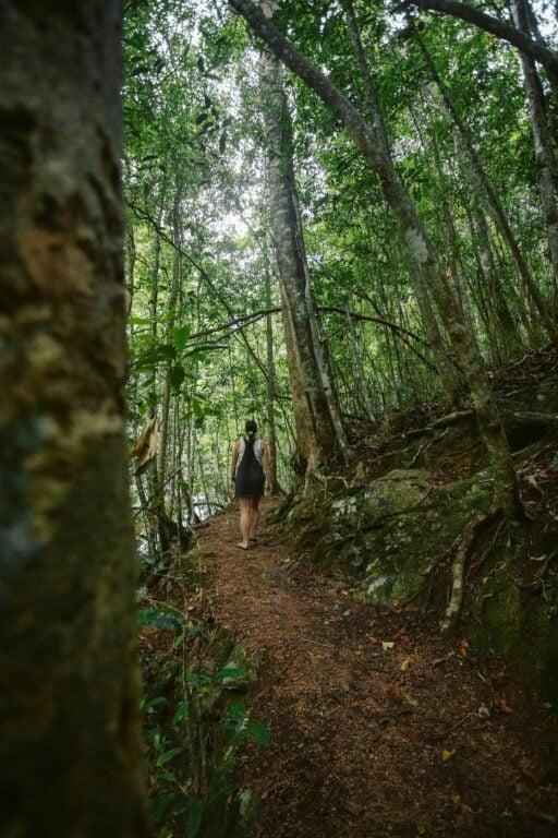 DINNER FALLS, MOUNT HYPIPAMEE WATERFALL LOOP WALKING TRACK