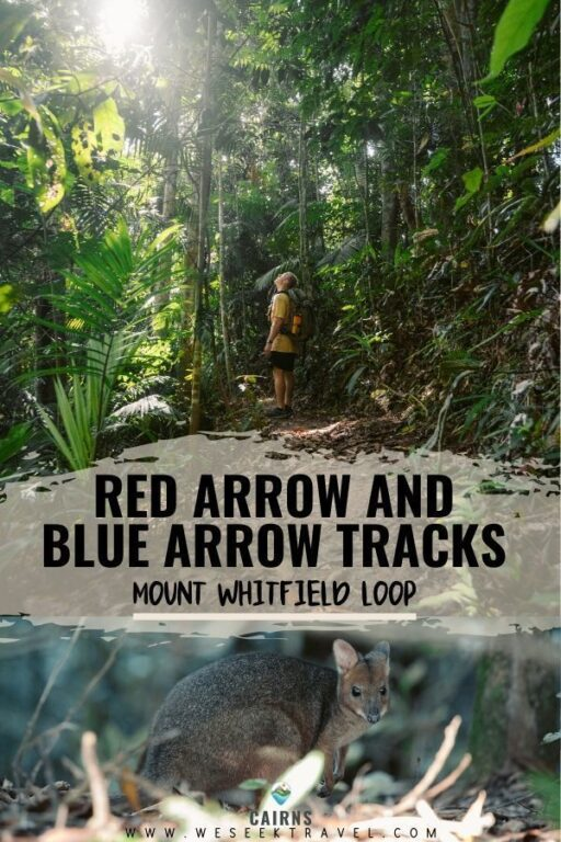 RED ARROW BLUE ARROW TRACKS CAIRNS