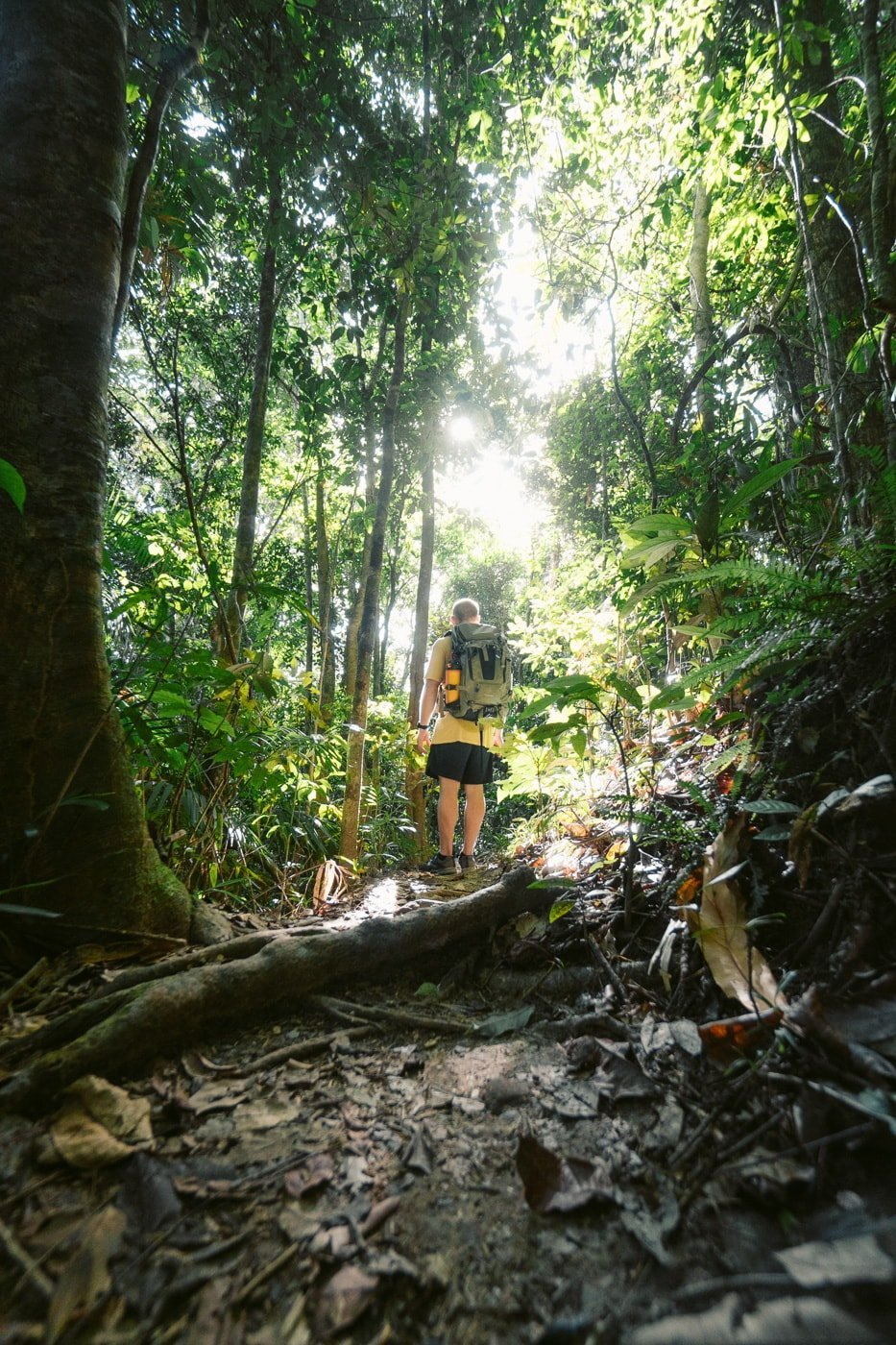 Blue Arrow Track in Mount Whitfield Conservation Park, Cairns