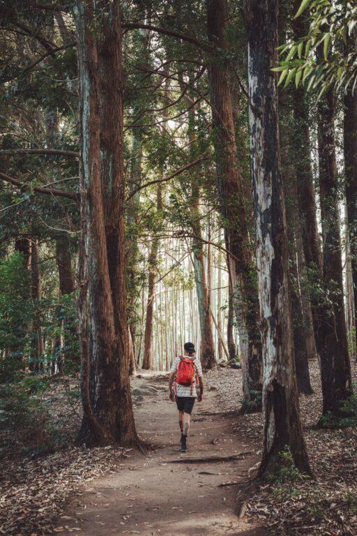 FOREST NEAR ELLA ROCK VIEWPOINT
