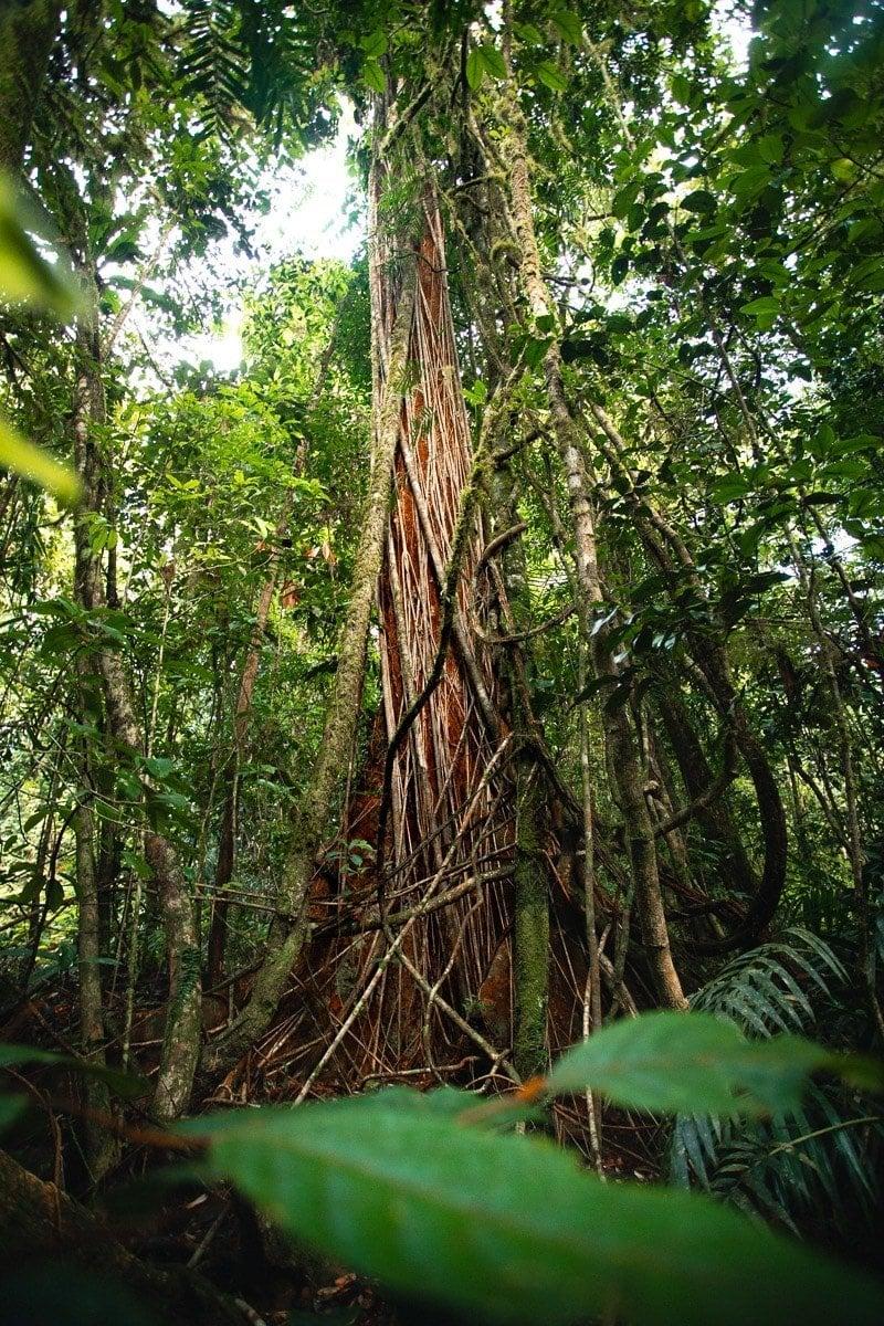 WOROONOORNAN NATIONAL PARK TREES