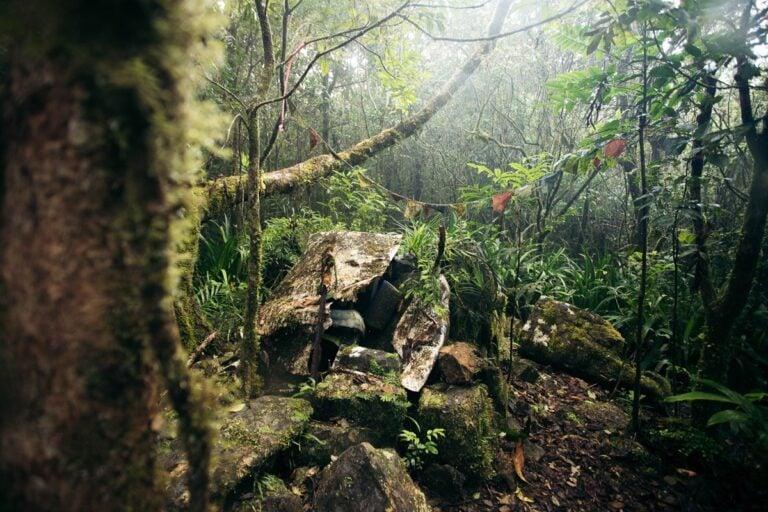 CAIRNS PLANE WRECK SITE MOUNT WILLIAM STONEY CREEK