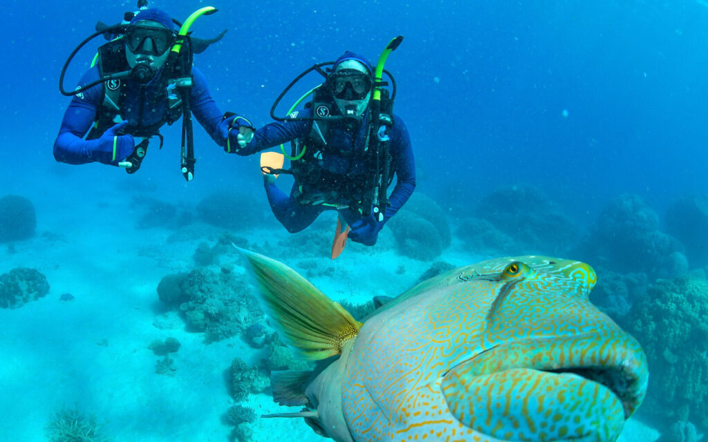 SCUBA DIVING ON THE GREAT BARRIER REEF TOUR CAIRNS