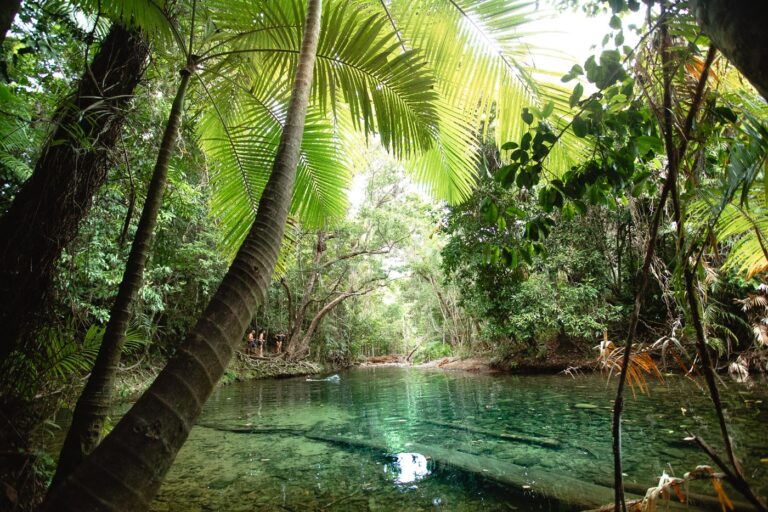 MASON'S SWIMMING HOLE, FRESHWATER SWIMMING HOLE IN CAPE TRIBULATION, DAINTREE