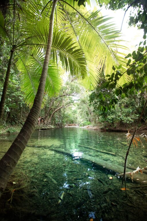 CAPE TRIBULATION SWIMMING HOLE, MASON'S WATERHOLE, DAINTREE RAINFOREST