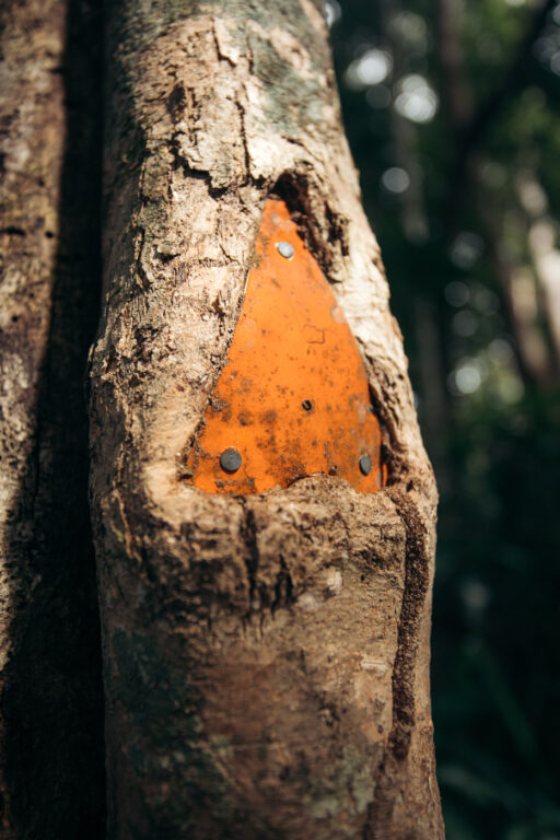 ORANGE MARKERS IN TREES FOR HIKING IN CAPE TRIBULATION