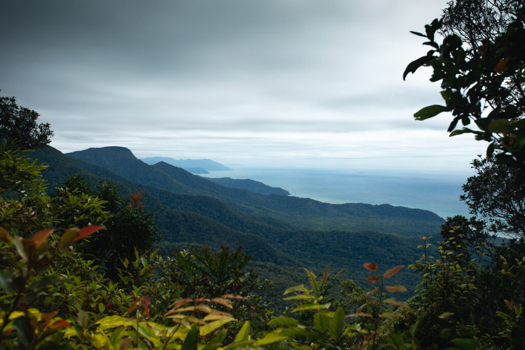 CAPE TRIBULATION VIEW FROM MOUNT SORROW