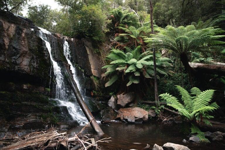 LILYDALE FALLS TASMANIA