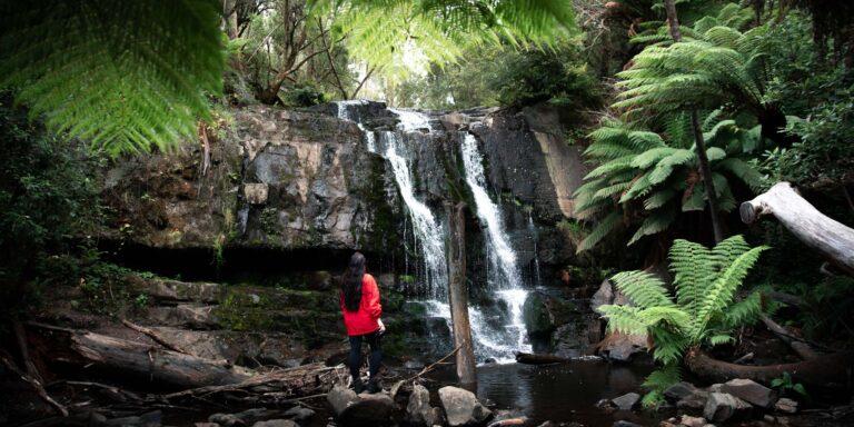LILYVALE FALLS TASMANIA