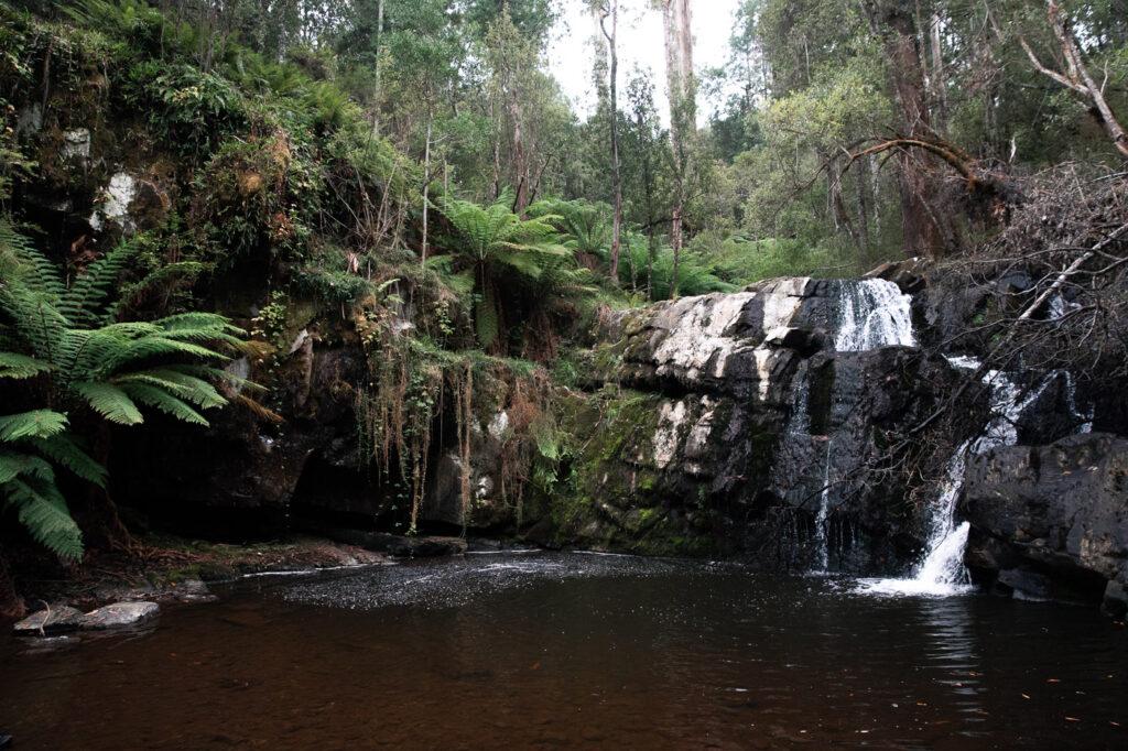 WATERFALL AT LILYDALE FALLS TASMANIA