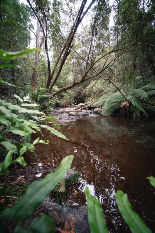LILYVALE FALLS FREE CAMPING