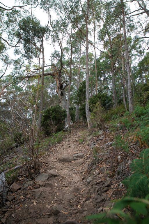 BISHOP AND CLERK FOREST TRACK