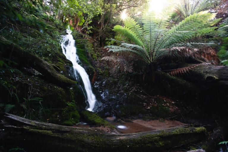 EVERCREECH FALLS TASMANIA