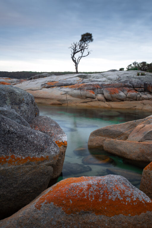 LONE TREE BINALONG BAY TASMANIA