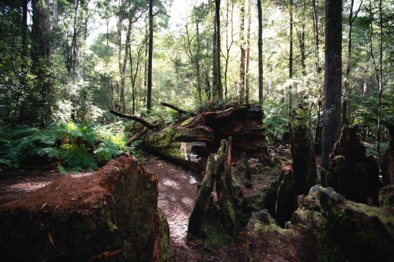 THREE FALLS CIRCUIT TRACK MOUNT FIELD