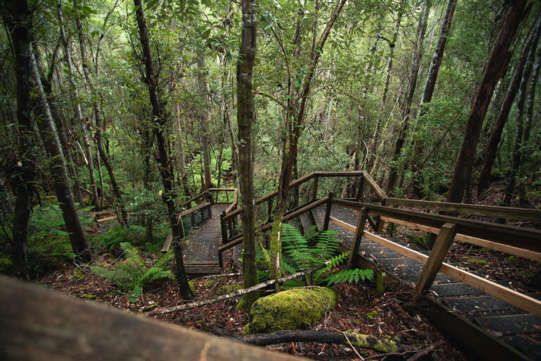 WOODEN STAIRCASE AT THE END OF THREE FALLS CIRCUIT MOUNT FIELD NATIONAL PARK