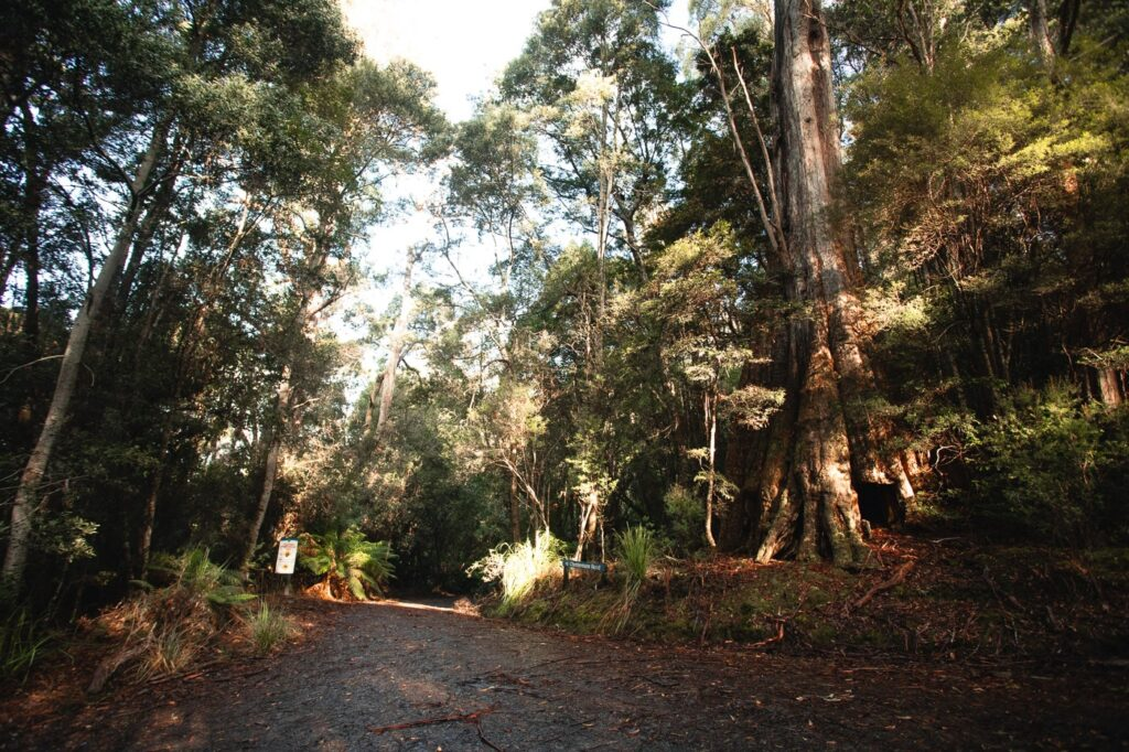 ROAD TO SOUTHWEST NATIONAL PARK FROM THE CAVES